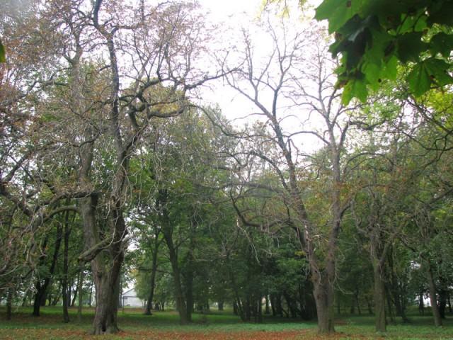 Kasztanowiec zwyczajny, kasztanowiec biały (Aesculus hippocastanum L.) – gatunek drzewa z rodziny mydleńcowatych. Pochodzi z Półwyspu Bałkańskiego. Uprawiany jest w niemal całej Europie, w tym także w Polsce. W Polsce […]