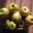 Tradycyjny przydomowy sady to dziś bardzo rzadki widok na polskiej wsi. Rosnące jeszcze nie tak dawno, jabłonie, grusze i śliwy zastąpiły ozdobne iglaki, a jeśli nawet obok domu […]